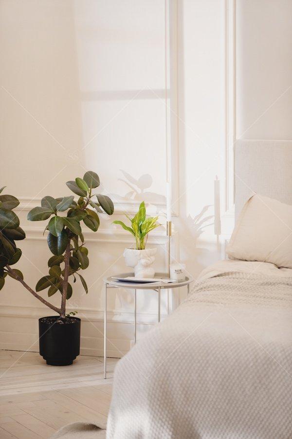 sunlight in a serene bedroom