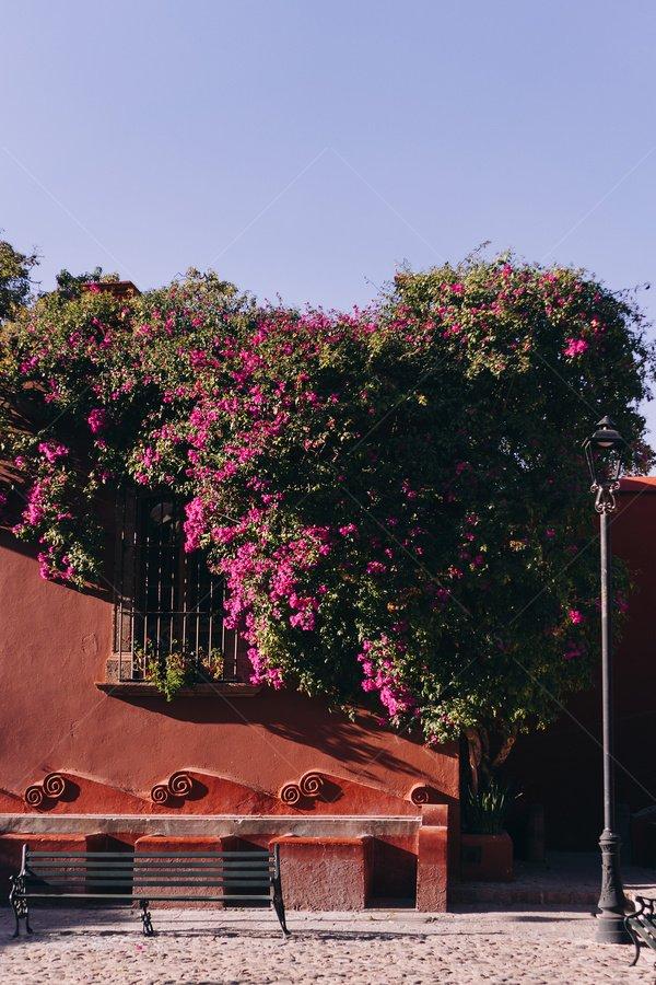 flowering street travel stock photo