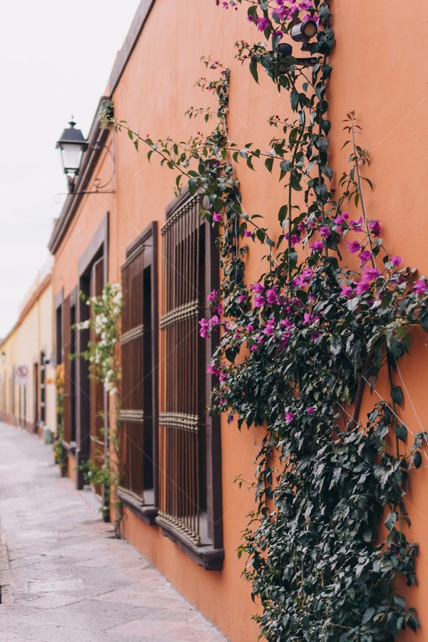 colorful buildings with greenery travel stock photo