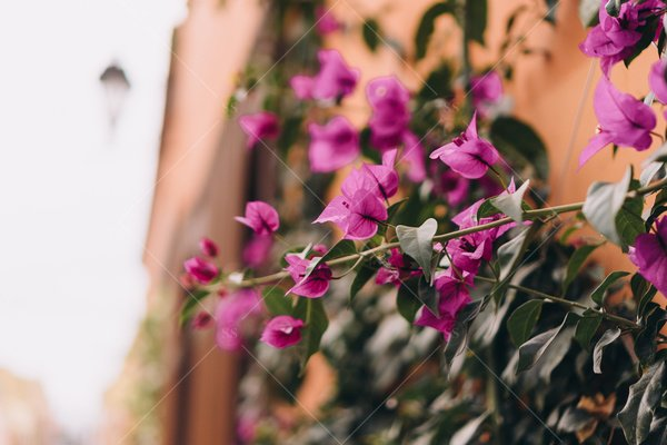 flowers on building travel stock photo