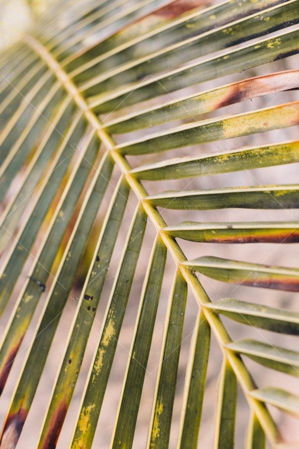 palm tree leaf close up stock photo