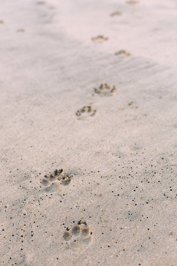 paw prints in sand stock photo