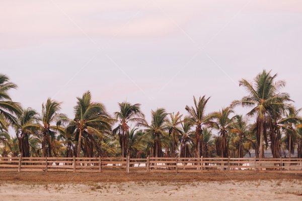 palm trees on beach stock photo