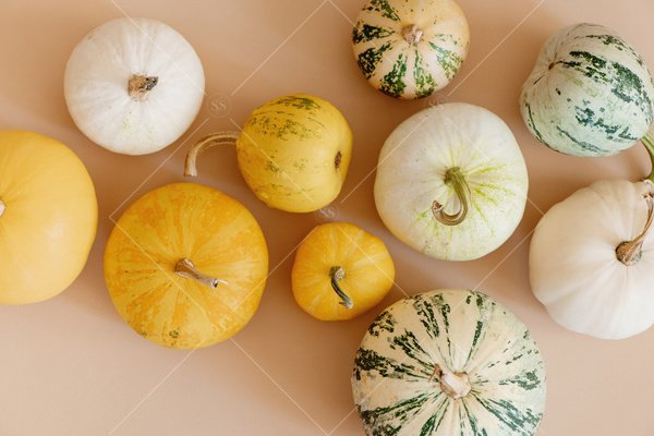 pumpkins and gourds stock photo