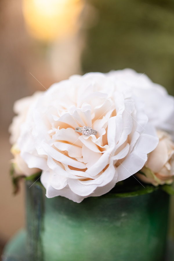 flower, flower pot, wedding ring, ring,