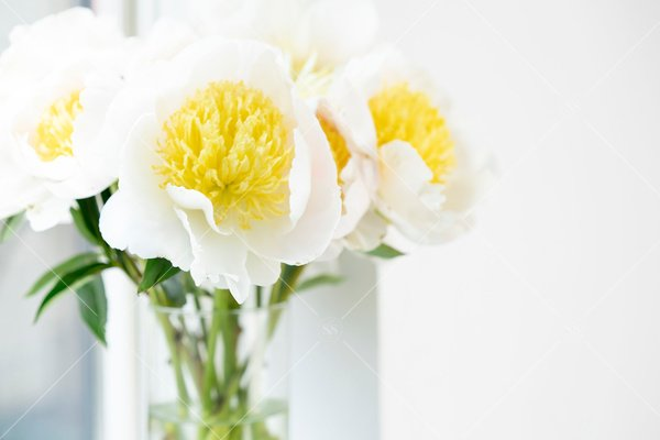 white and yellow flowers in a vase
