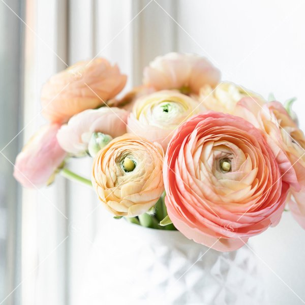 coral ranunculus in a white vase