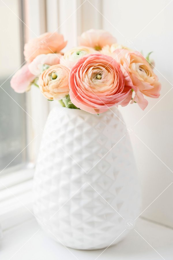 Coral ranunculus in a white vase.