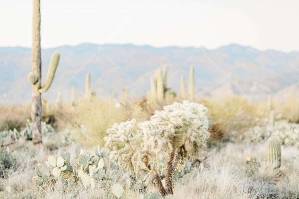landscape photo of desert with cacti and scrubs with mountains in the distance