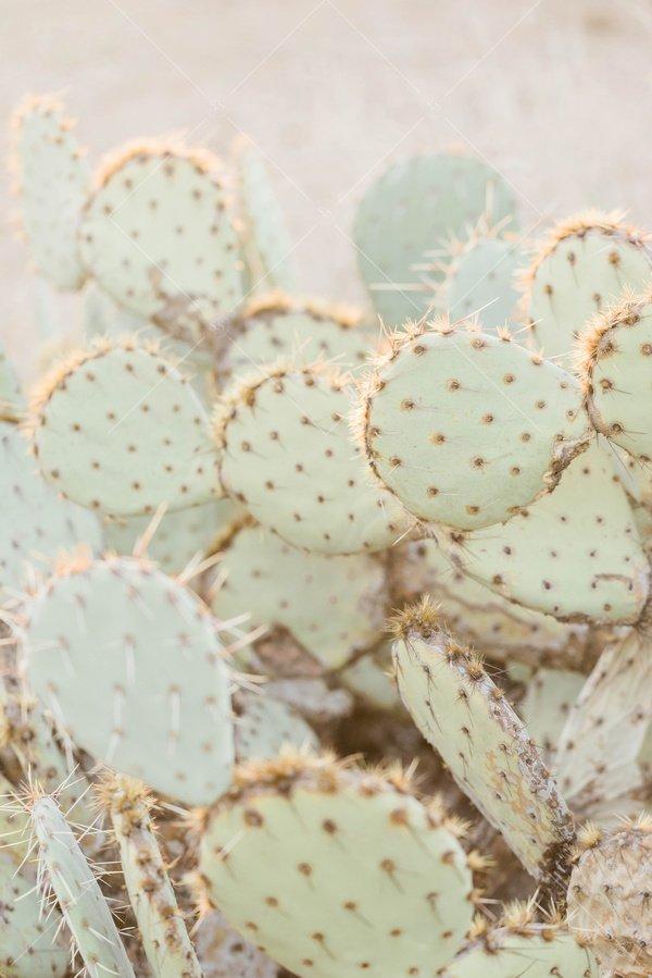 close up photo of cacti