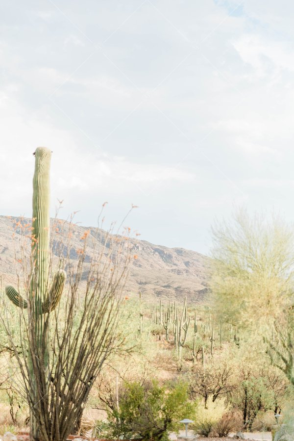 photo of desert landscape with cacti and mountains