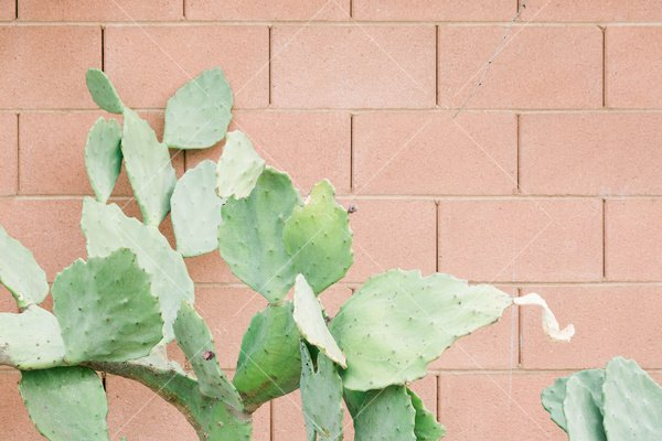 green cactus leaves against a faded red brick wall