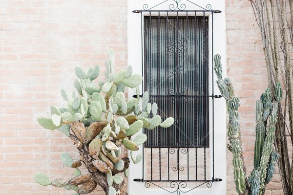 brick wall with window and cacti