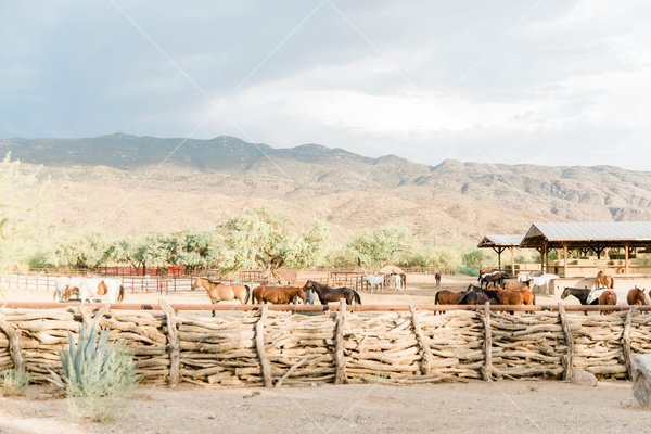 horses mulling around inside of a wooden fence with mountains in the backgroun