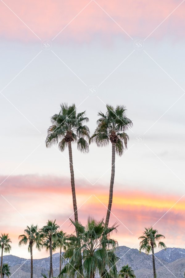 palm trees sunset in Palm Springs
