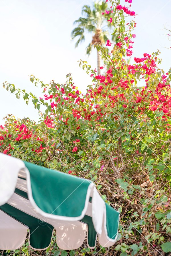 green umbrella with red flowers
