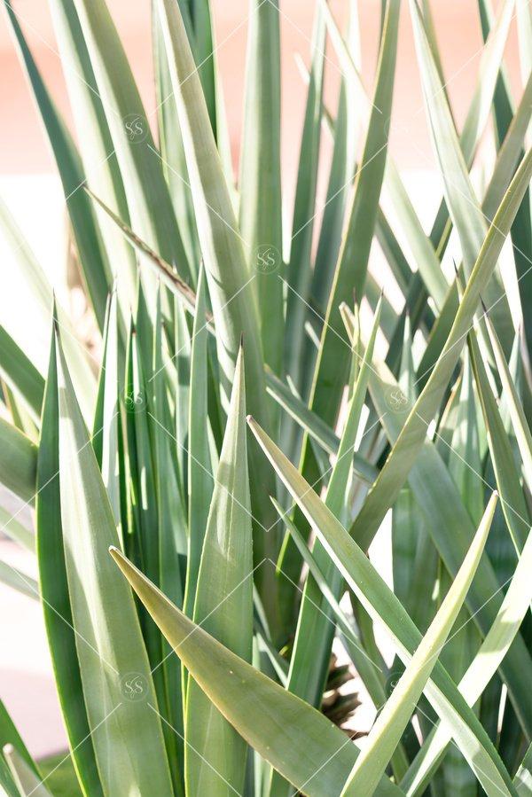 desert plants in Palm Springs